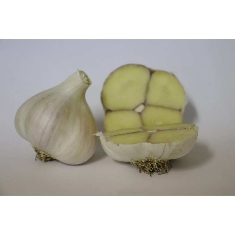 Česká odrůda česneku Dukát